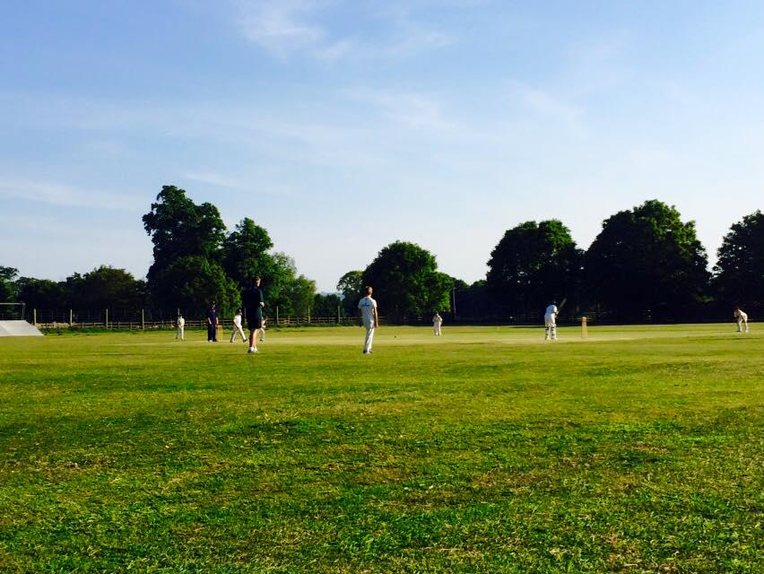 cricket in summer